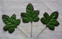GREEN with DARK BROWN EDGE ACER LEAVES (40mm) Mulberry Paper leaves